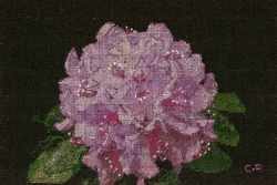photo-broderie-point-de-croix-points-comptes-le-rhododendron-creation-de-christine-prigent.jpg